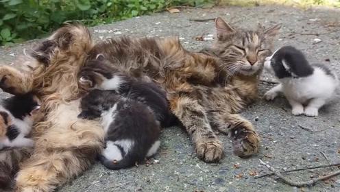 母猫带孩子其中一只亮了,转头亲了母猫一口:妈妈辛苦了!