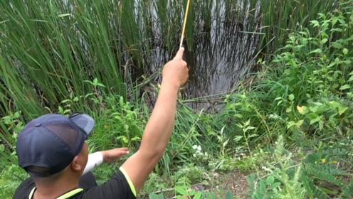 钓鱼:水面不停的在冒小气泡,水下肯定是来了一群鱼呀!