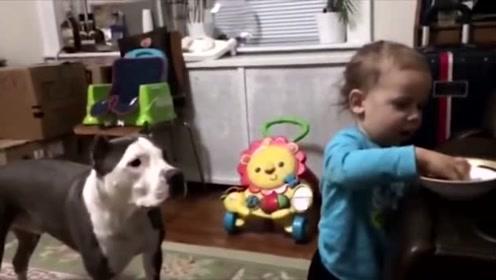 汪星人:小朋友和小奶狗的亲密接触