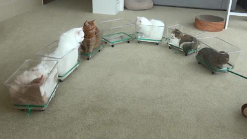 主人为讨好自家的猫主子,制作简易的小火车,猫咪:我能拒绝吗