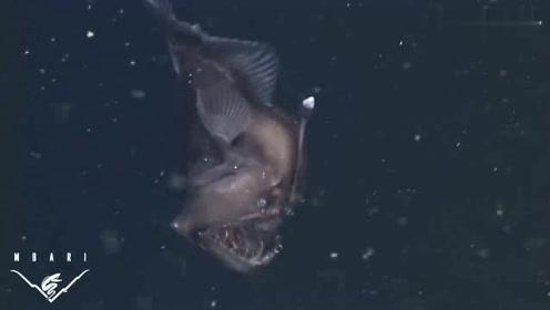 深海摄像机进入未知海域,偶然拍到几只诡异的海洋生物