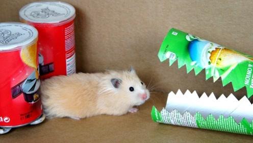 用薯片罐制作障碍跑道,放仓鼠进去示范,结果太有意思了!