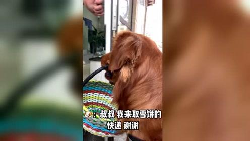 这才叫养金毛,什么活都会干,你家的狗狗能做到吗?