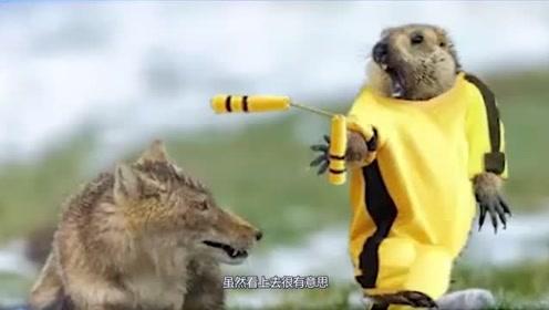 藏狐和旱獭生死对决,被摄影师拍下精彩瞬间,还成了世界冠军!?