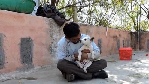 外国小哥救助流浪犬,看到狗狗的模样,网友纷纷泪目