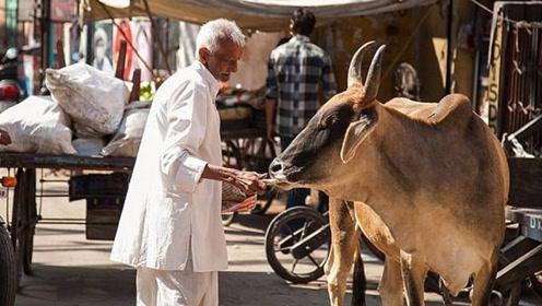为什么印度人不吃猪肉,不吃牛肉,连鱼肉也不怎么吃?看完才知道