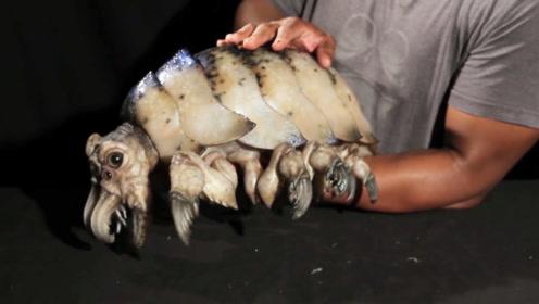 渔夫打捞到一只神秘生物,专家细看后,脸色一变:原来是它!
