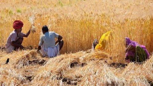 同样是人口大国,为何印度能向全球出口粮食,中国却要到处买粮食