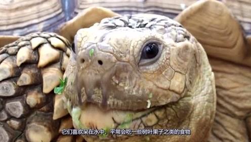 为防止象龟灭绝,科学家把它带来无人岛,几年后人们惊呆了