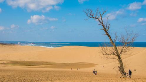 世界上最顽强的沙漠,为了防止其草原化,定期砍伐树木保护沙子?