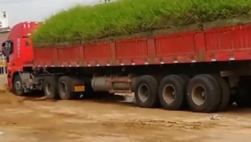 货车司机偷懒没打扫汽车,3个月后货车秒变山坡,车内草有1米高