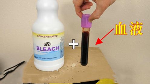 血液会变成白色吗?老外在血液中加入漂白剂,结果眼见为实!