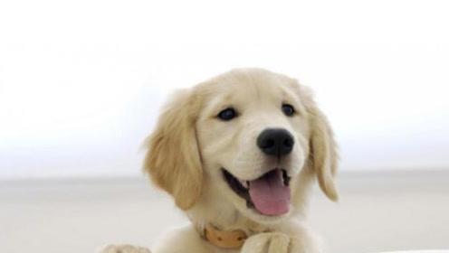 周公解梦:梦见狗有何寓意?这几种是大吉的征兆!