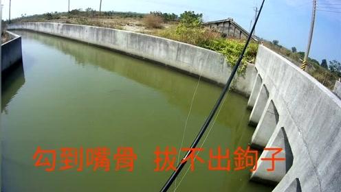 出海口前打钓鱼,黑鲷鱼拉拉也不错