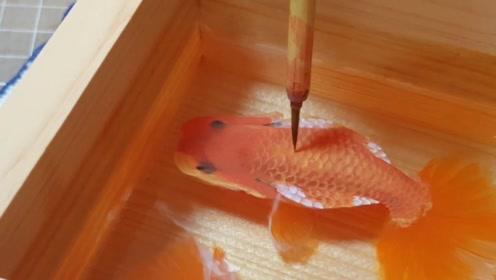 """日本画家潜心十二年,竟把金鱼画""""活""""了,你能分辨出吗?"""