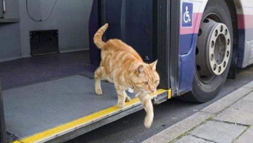 一只猫独自坐公交5年,偶尔迟到司机还会等它,背后故事让人泪目