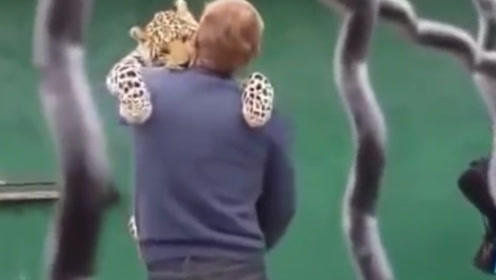 美洲豹许久未见饲养员,猛的一下扑在男子怀里,就是只大花猫