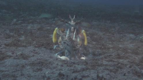 一拳超虾 VS 章鱼 有功夫就是不一样