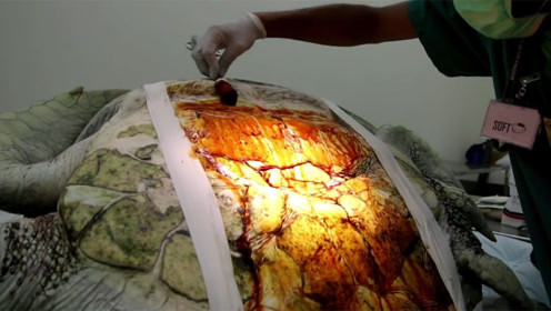 饲养25年的乌龟突然离世,割开肚子让人愣住,里面有915枚硬币!
