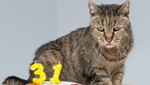 """世界最长寿的猫,年龄相当于人类的144岁,堪称猫界""""老祖宗"""""""