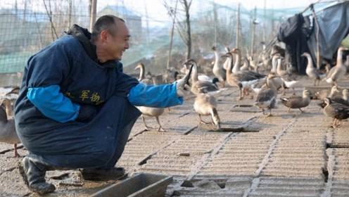 为何近年中国大雁越来越少?并非环境影响,而是大雁回国半路直接被捕杀!