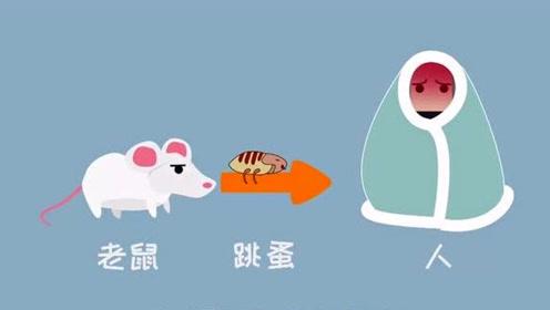 官方发布北京鼠疫病例已妥善处理,还要担心吗?