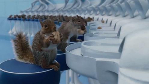 工厂雇100只松鼠来剥核桃,比机器还要快,镜头记录全过程