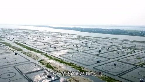 阳澄湖水质告急:多家农家乐违规排污,饮水安全谁来保障?