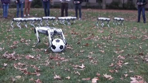 身手敏捷!麻省理工学生研制踢球机器豹,撞翻起身还能后空翻