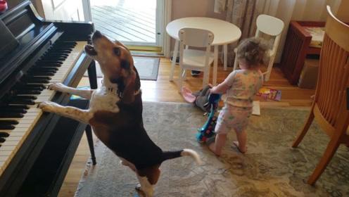 狗狗和宝宝独自在家,主人打开监控后看愣了,镜头录下搞笑画面!
