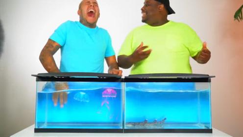 """男子挑战未知""""神秘鱼缸"""",手一进一出,画面太刺激了!"""