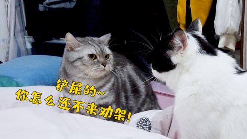 虎斑猫瞧这要打起来了!向铲屎官抛来求助的眼神,真是又好笑又气