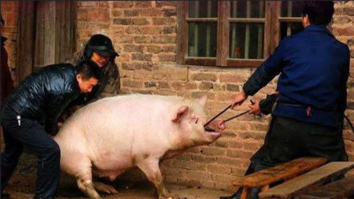 杀猪不见血,就连惨叫声都没有,这种场面还真是头次见!