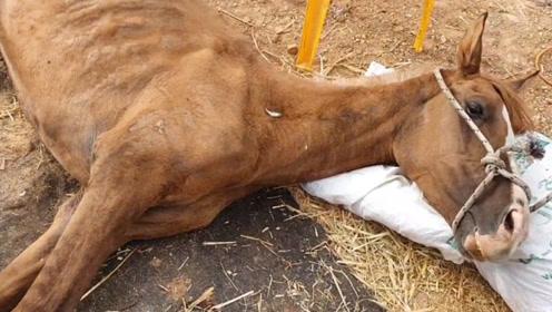 马儿守在马厩里,却不知主人早已离世,被发现时已是这副模样