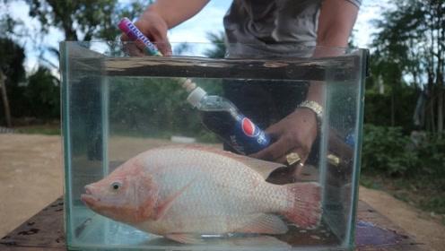 拿一条鱼放在可乐曼妥思中,结果还真是难以想象