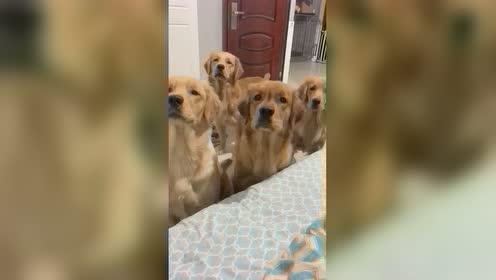 当你决定暂时不跟狗子玩之后。。就问这攻势谁能顶得住!
