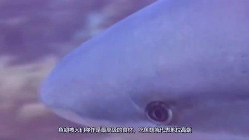 被割掉鱼翅的鲨鱼,放回海中还能活多久?网友:心痛