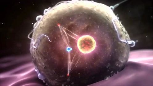 从受精卵到人体细胞的生成