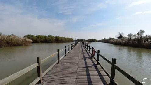 实拍黄河三入海口湿地生态保护区