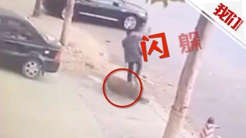 大连街头一野猪出没攻击行人 目击者:有200多斤到处乱拱