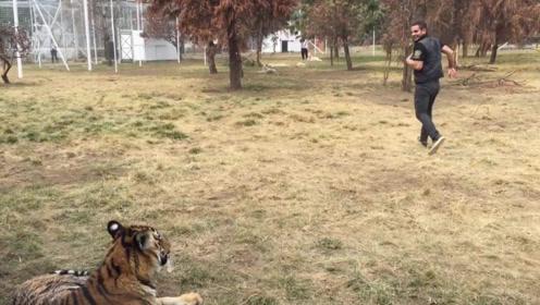 为何当人遇到老虎时,千万不要转身逃跑?今天可算知道了