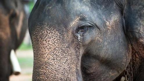 大象被锁山上50年,被解救的那一刻,这个反应让人心疼!