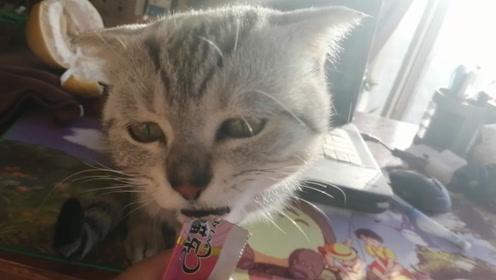 早上7点半,起来给小猫准备吃的,猫:这么晚,你是要饿死我吗?