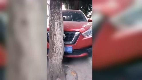 硬核司机!1分钟将车停进两树之间车身前后缝隙仅6厘米