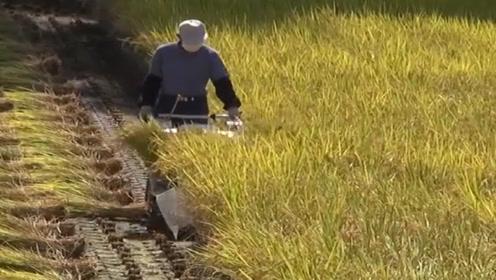 国外发明小型水稻收割机,体型小巧效率高,山区农民的福音来了