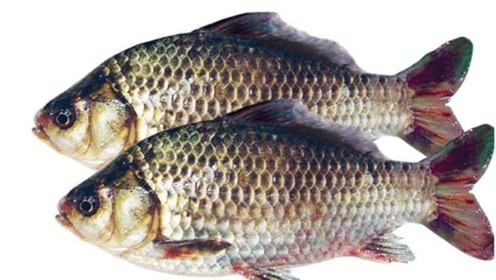 保存鲜鱼,直接丢冰箱就错了!教你一招,吃着跟活鱼一样鲜