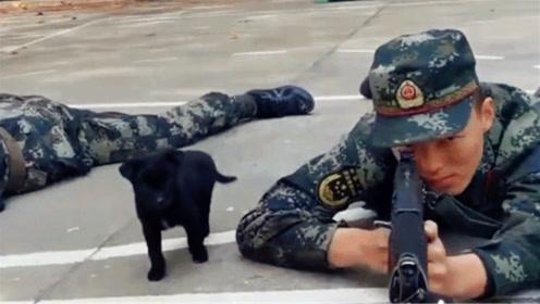 全程甜蜜暴击!兵哥趴地训练遭狗子对脸一顿狂舔