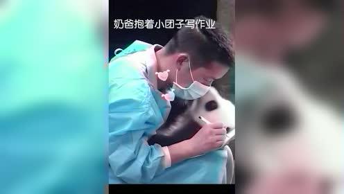 这个奶爸有点帅哦!这个熊猫很可爱哦!好想抱着玩!