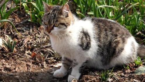 农村猫咪死后见不着尸体,以前不知道原因,看完后终于懂了