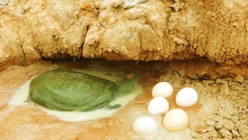 农村小伙往洞穴倒可乐,小家伙们接连爬出来,这鳖抓得真过瘾!